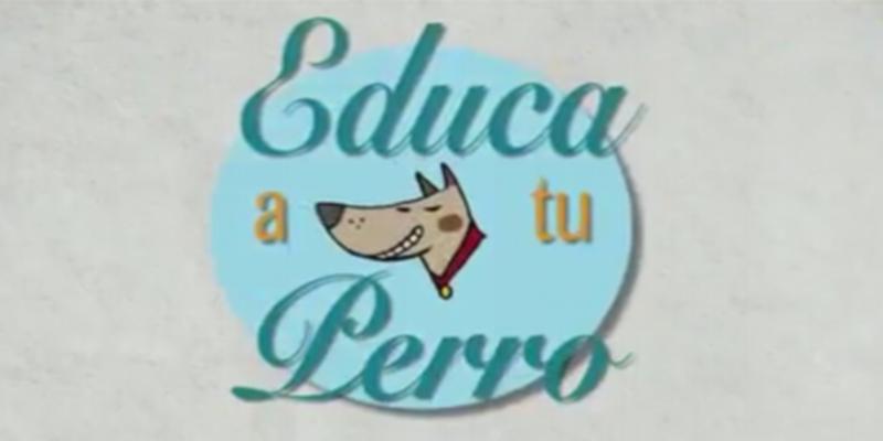 Video del Ayuntamiento de Castellón, educa a tu perro